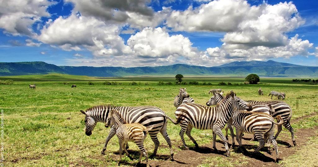 Les événements immanquables en Tanzanie