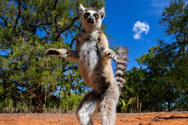 Quelques endroits incontournables à l'Est de Madagascar